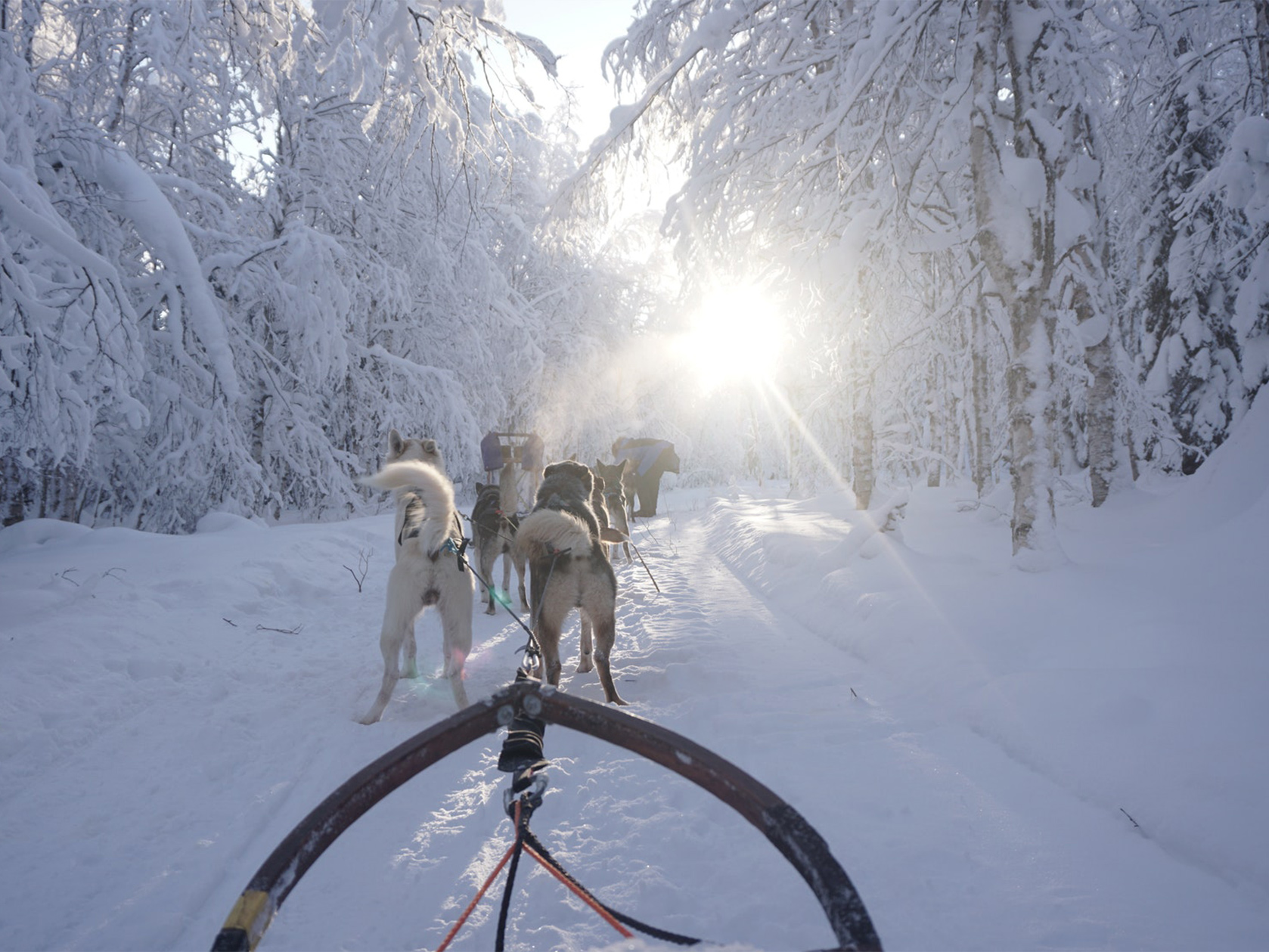 wintertour_3dayhuskytour_1