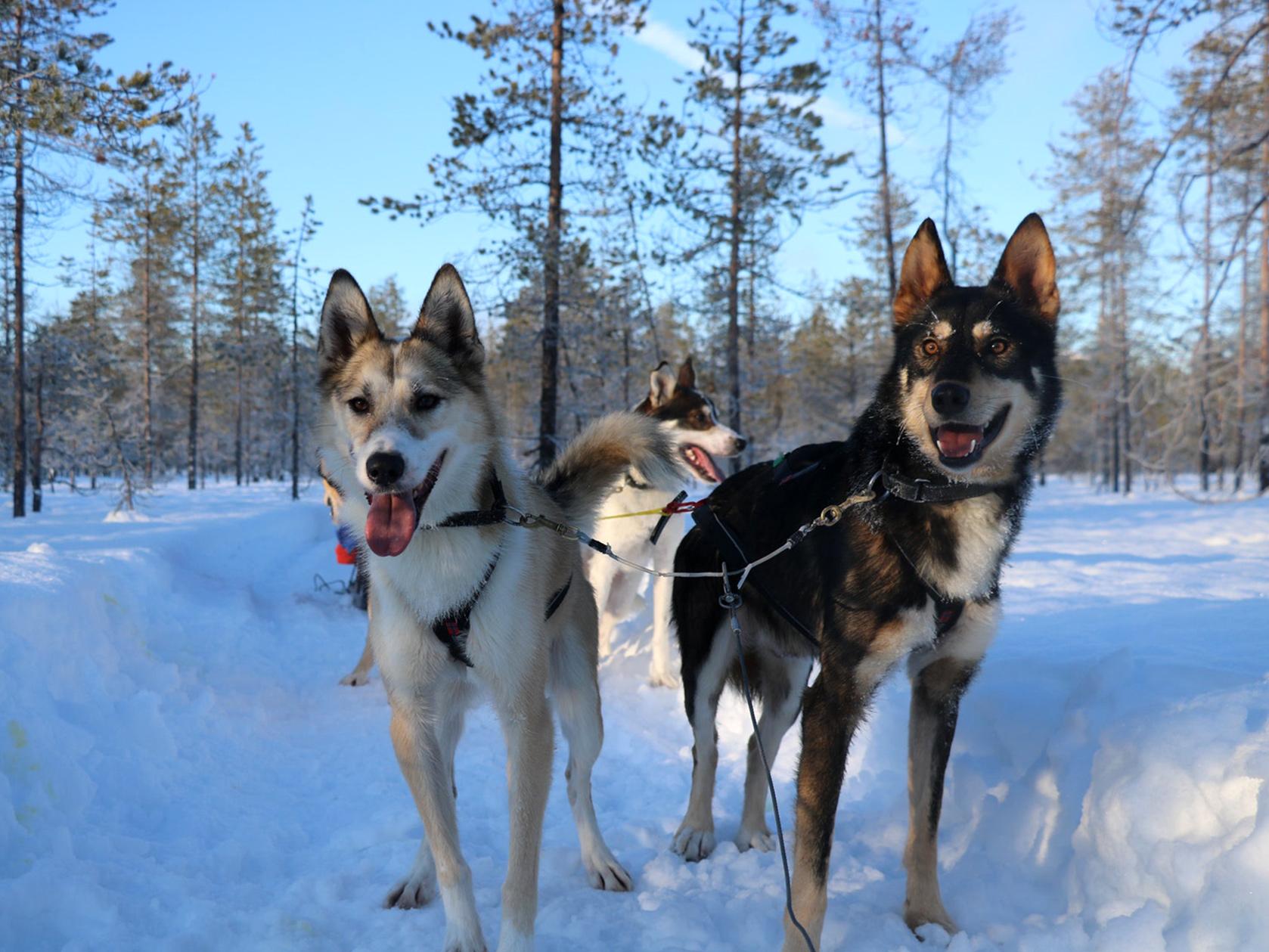 wintertour_4dayhuskytour_2