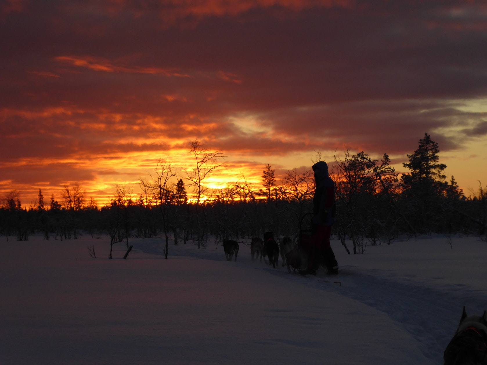 wintertour_eveninghuskytour_5