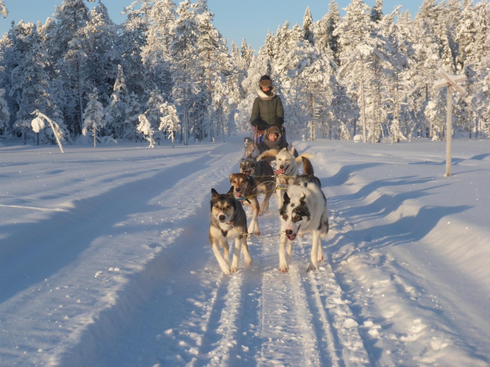 wintertour_halfdayhuskytour_6