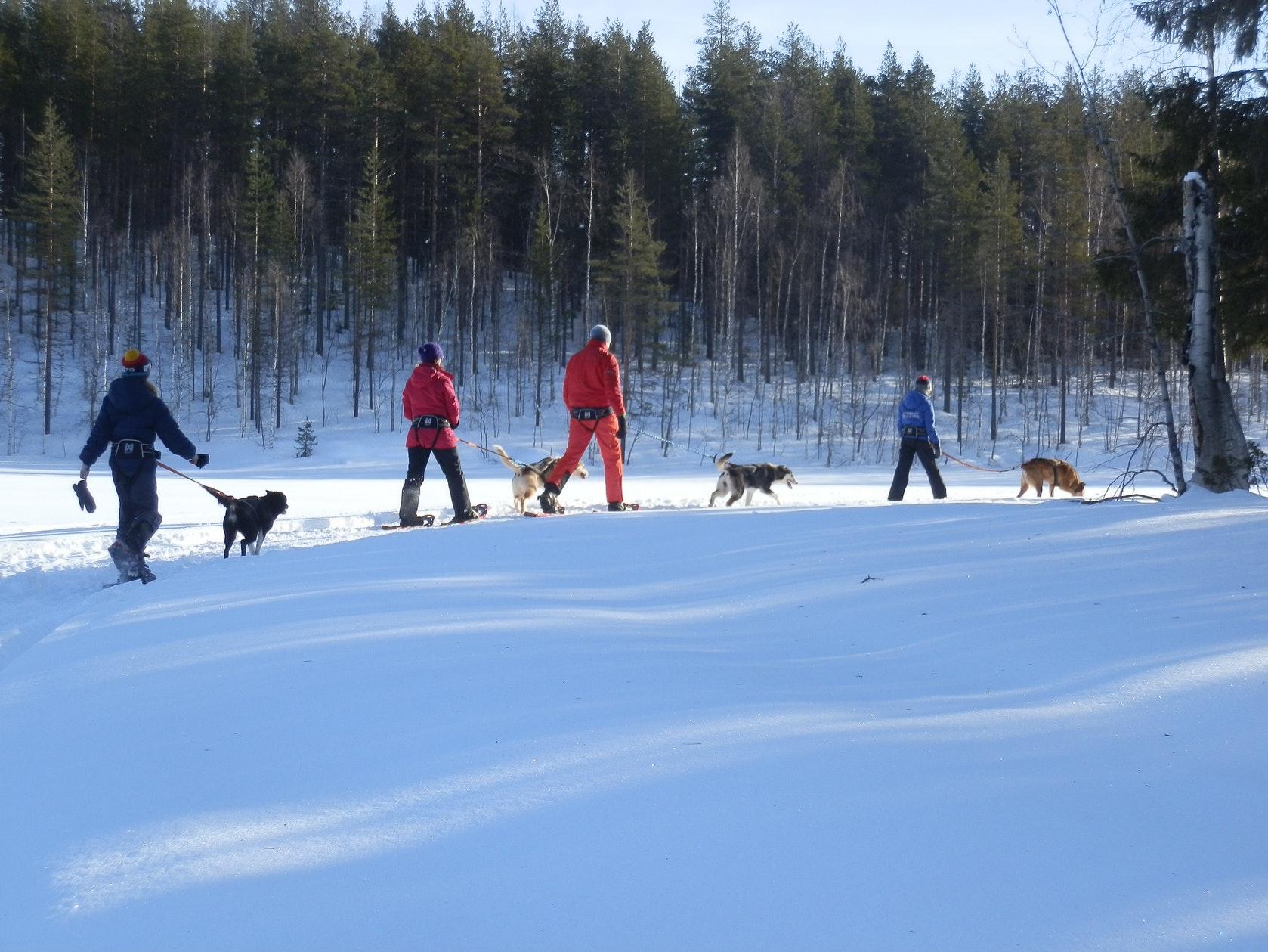 wintertour_huskysnowshoewalk_1