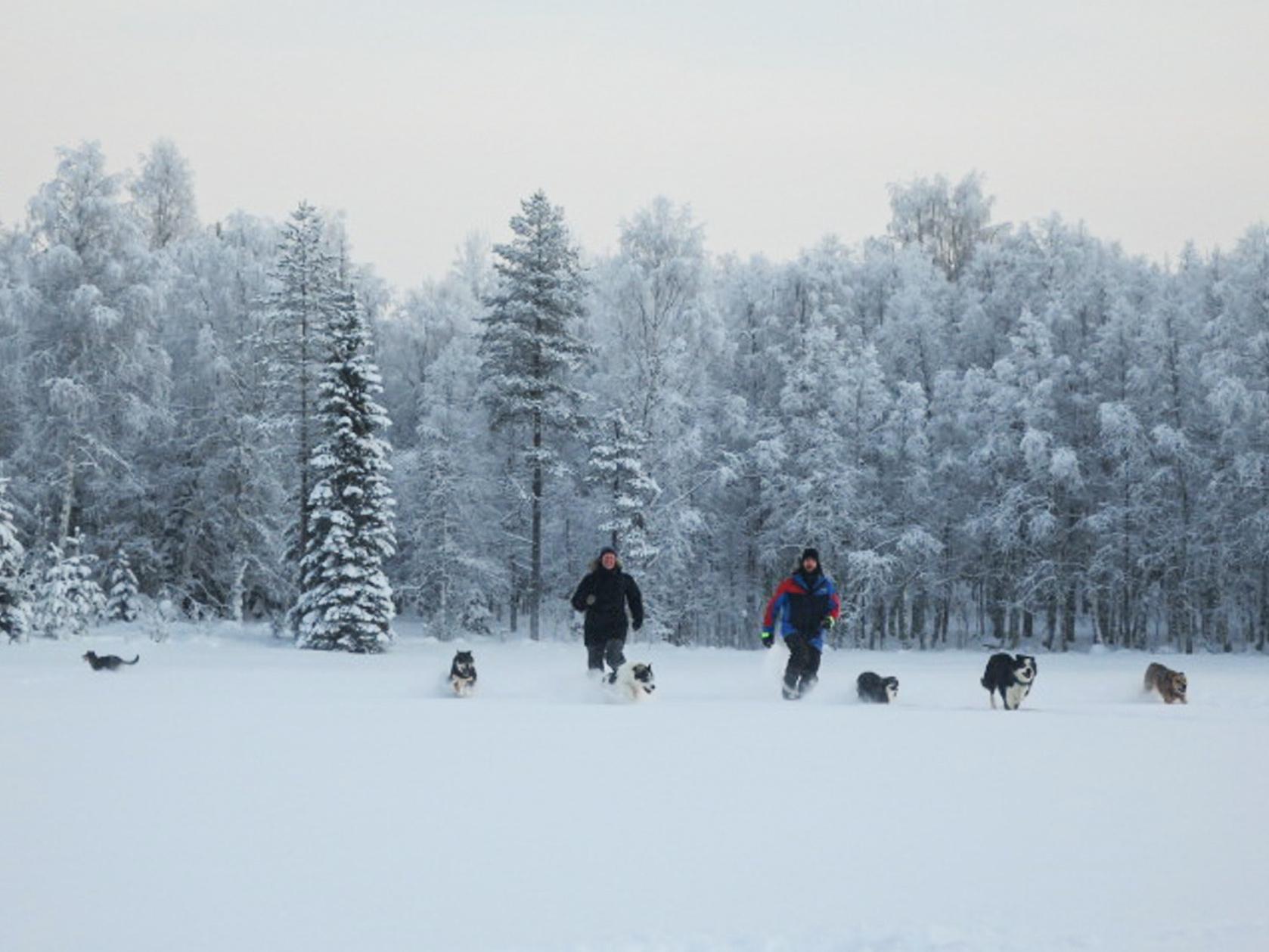 wintertour_huskysnowshoewalk_6