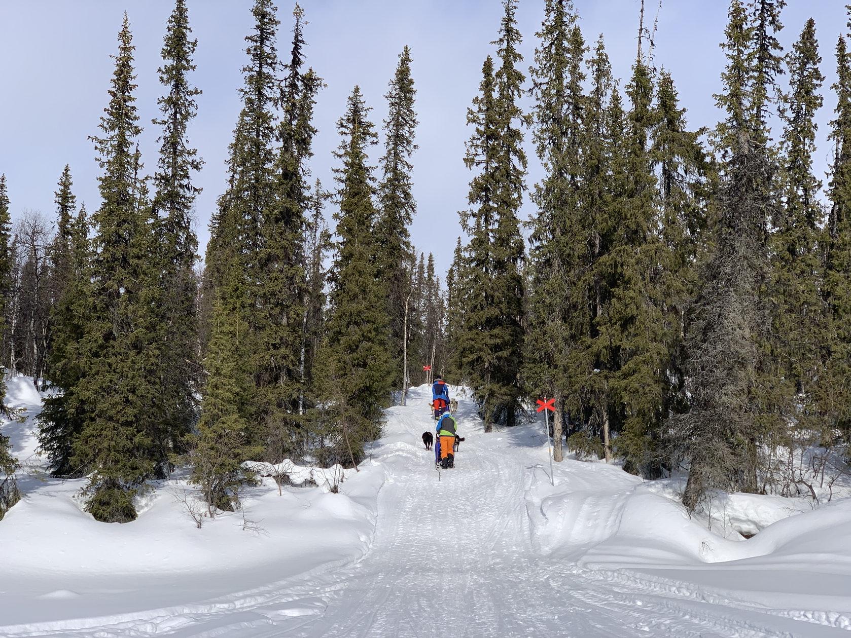 wintertour_mountaintour_laponia_10