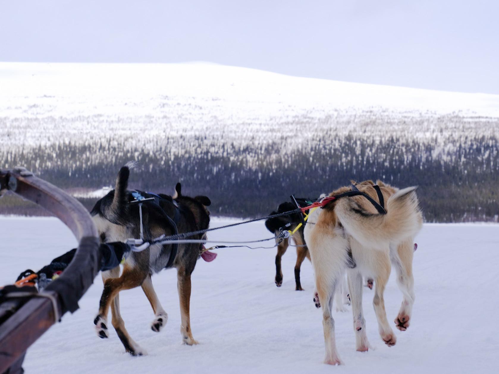 wintertour_mountaintour_laponia_2