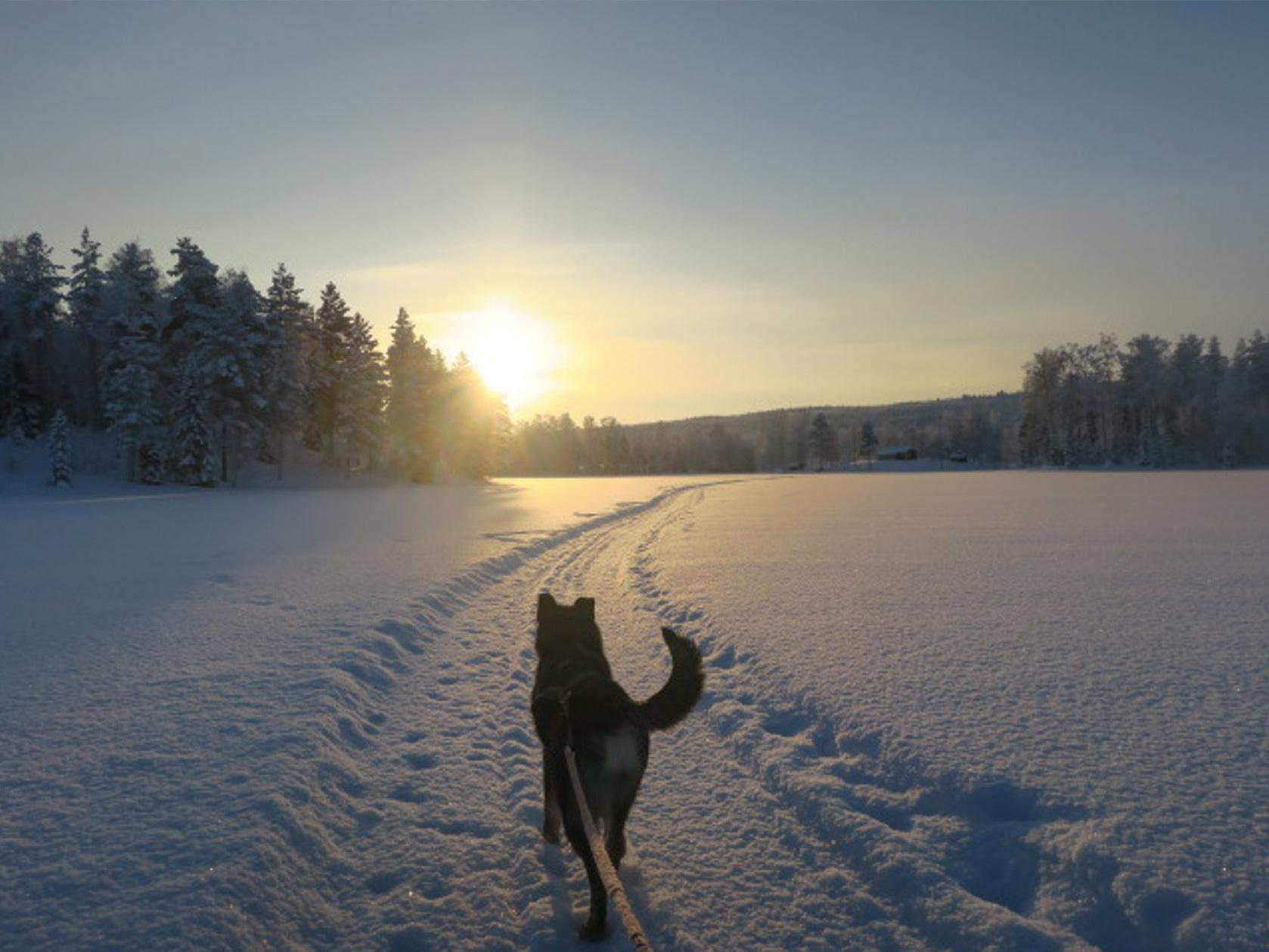 wintertour_snowsleddingsnowshoewalk_2