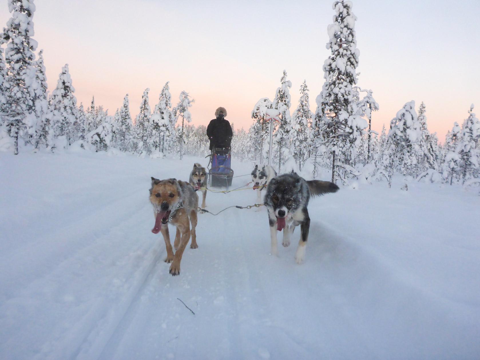 wintertour_snowsleddingsnowshoewalk_6